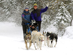 Canmore Dog Sled Tours