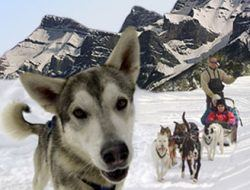 Banff Dog Sled Tours